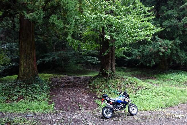 10 巨木の森.JPG