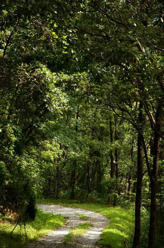 10 林道らしい風景です.JPG