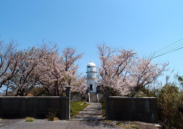 11 桜満開の灯台.JPG