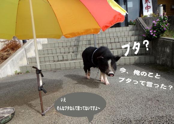 11 翻訳.jpg