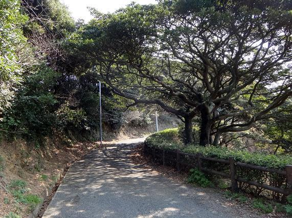 12 展望台までの道.JPG