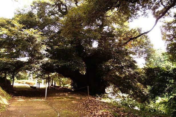 13 どんぐりの木.JPG
