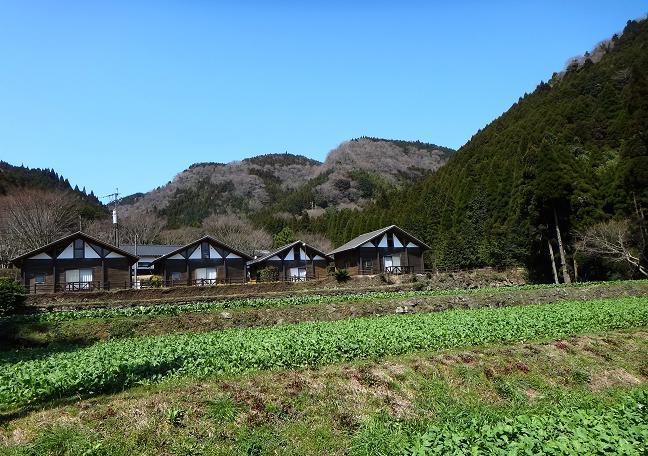 13 阿蘇高菜の畑.JPG