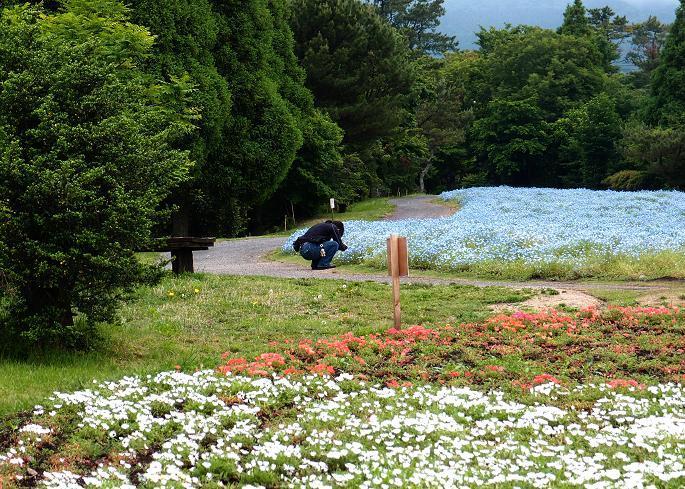 14 花撮り.JPG