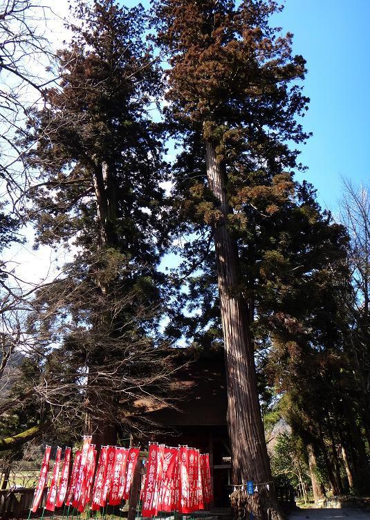 17 千年杉.JPG
