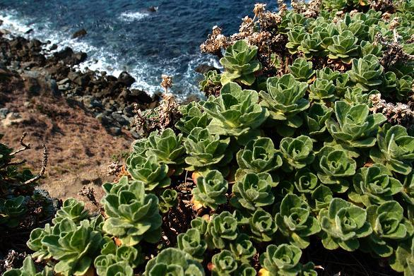 17 岩場の植物.JPG