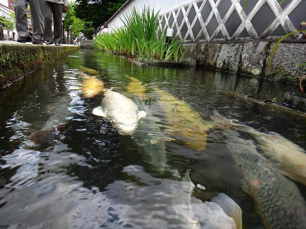 19 初めてドMカメラが巨大鯉に挑む.JPG