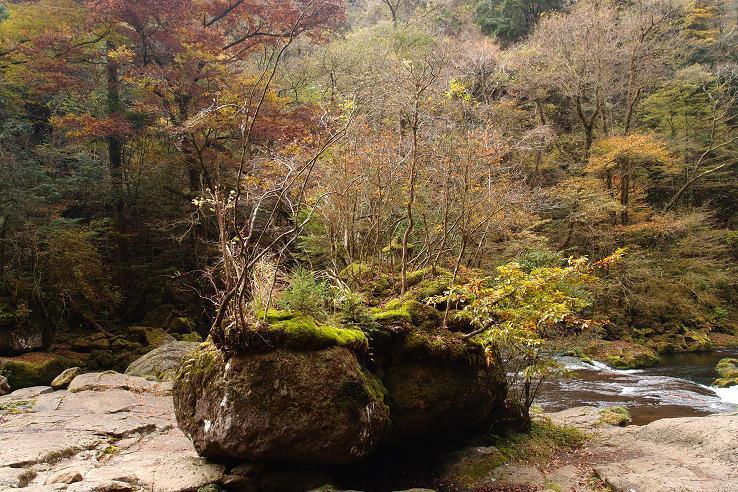 19 岩の上に木が生えています.JPG