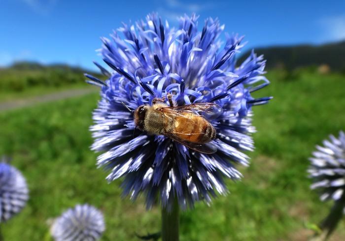 1 ミツバチ.JPG