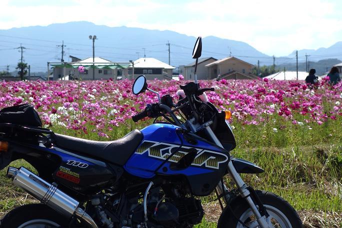 1 秋の桜と書きます.JPG