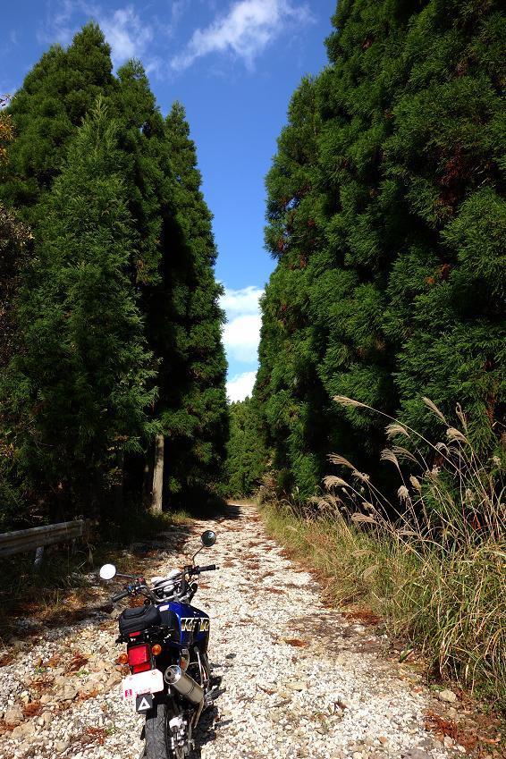 21 ステキな林道でした.JPG
