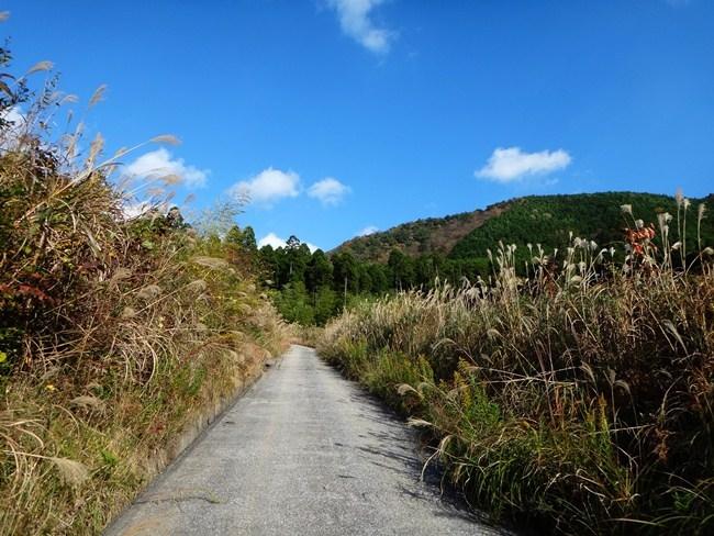 22 林道の頂上らへん.JPG
