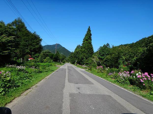 22 高原の道には花が似会う.JPG