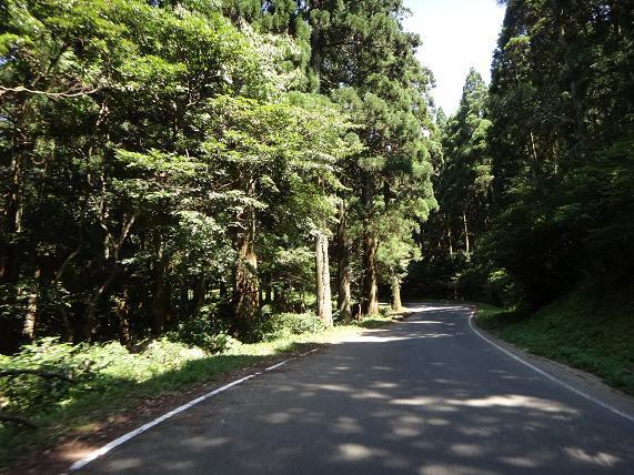 23 杉の森の杉が段々デカくなる.JPG