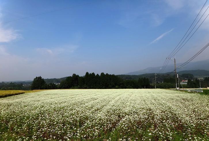 24 そば畑.JPG