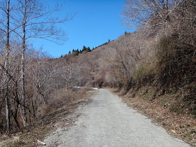 24 明るい林道です.JPG