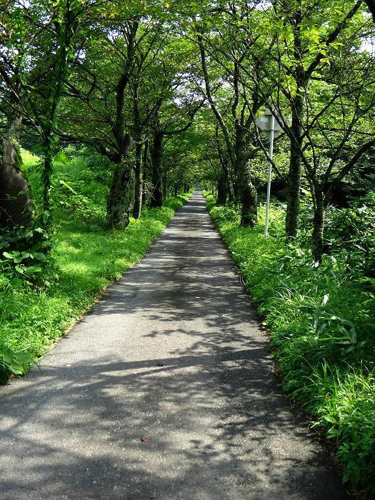 28 1km続く桜並木.JPG