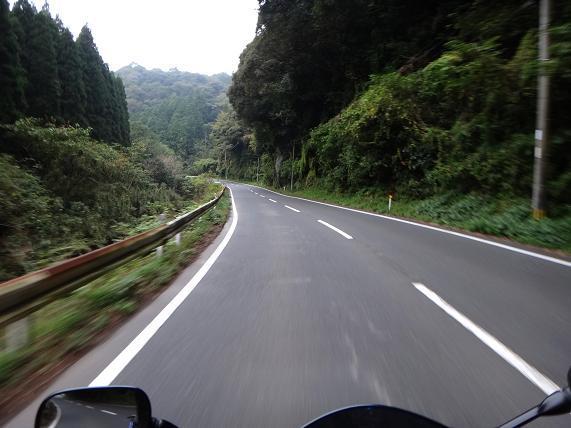 2 緑の濃い県道.JPG