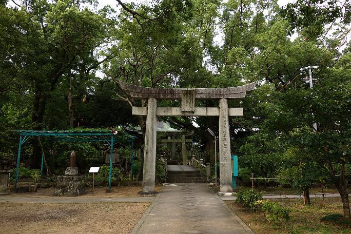31 大きな楠が7本ある松森神社.JPG