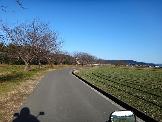31 春は桜と菜の花が綺麗な農道.JPG