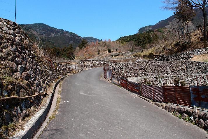 3 宝珠山の棚田.JPG