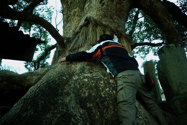 41 木のパワーを吸収しよう.JPG