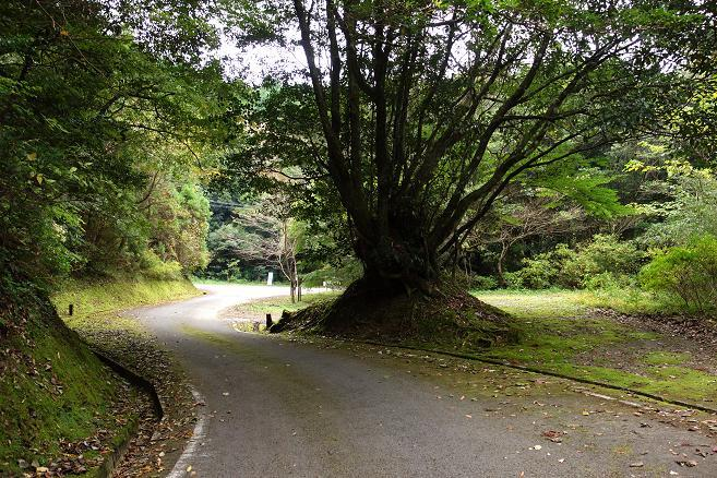 48 道に苔が生えてるなんて常識でしょう.JPG
