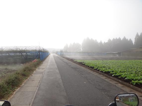 4 日田で霧霧.JPG