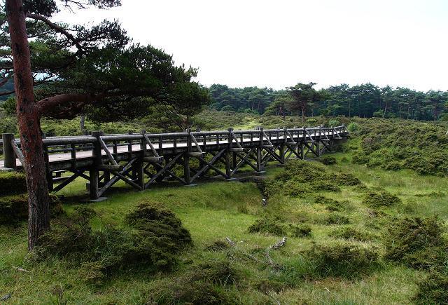 4 高原の遊歩道.JPG