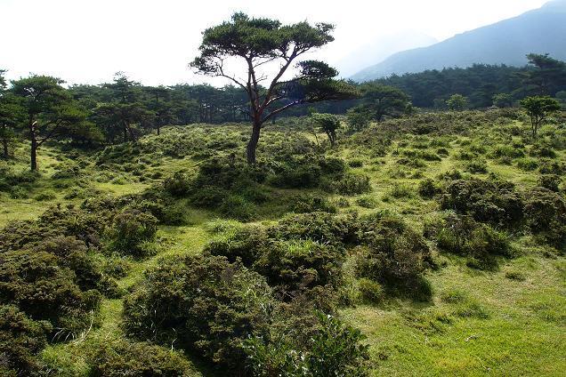 5 下の木はミヤマキリシマです.JPG