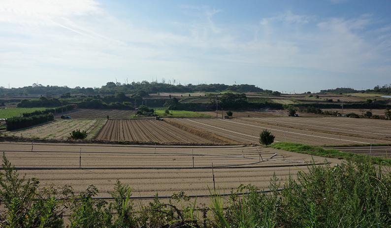 5 砂地の畑.JPG