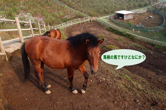 6 馬といえばこの毛色.jpg