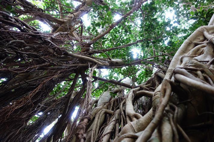 7 一本の木だけでジャングルだよ.JPG