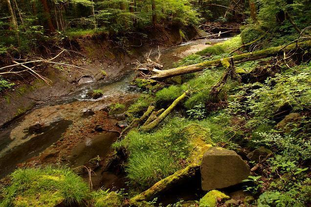 7 川も護岸をしていないので自然のままに壊れます.JPG