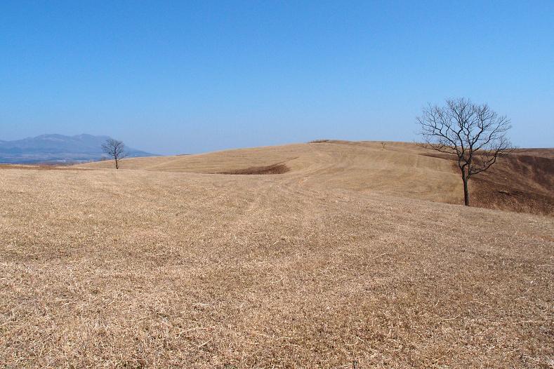 7 牧草地です.JPG