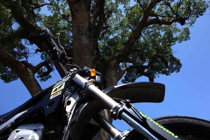 9 楠の木.JPG