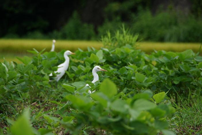 そろそろ野鳥にチェンジの季節.JPG