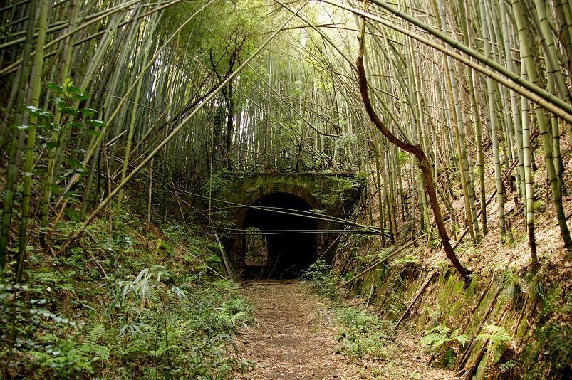 大棚隧道です.JPG