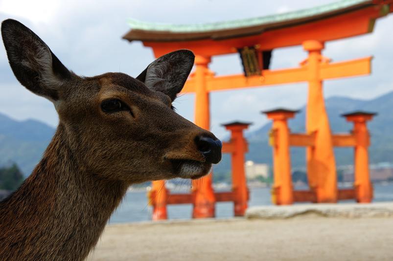 宮島と言ったら鹿.JPG