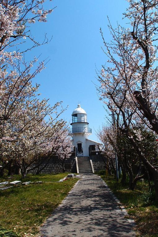 桜に歓迎されてる廃墟ハンター.JPG