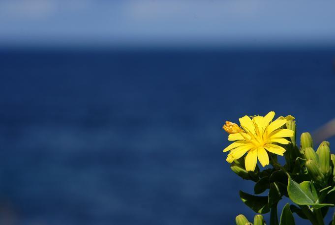 海に咲く野草.JPG