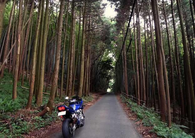 近所の林道.JPG