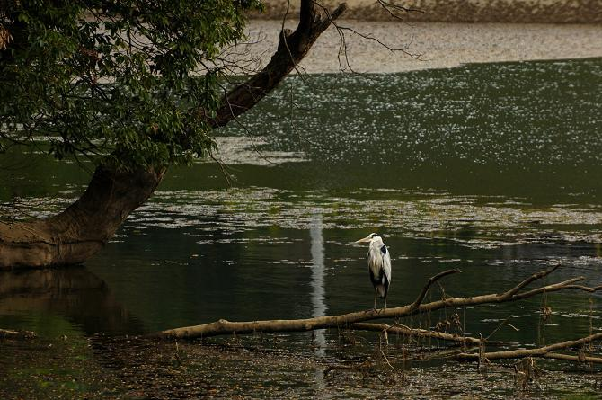 近所の池.JPG