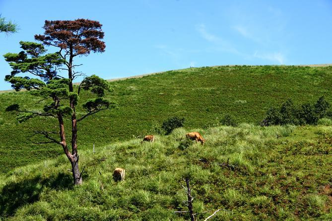 a8 平和な丘の風景.JPG