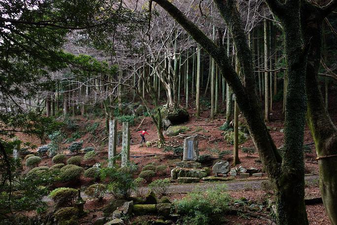 41 岩に生えた木を目指すDカップ少女.JPG