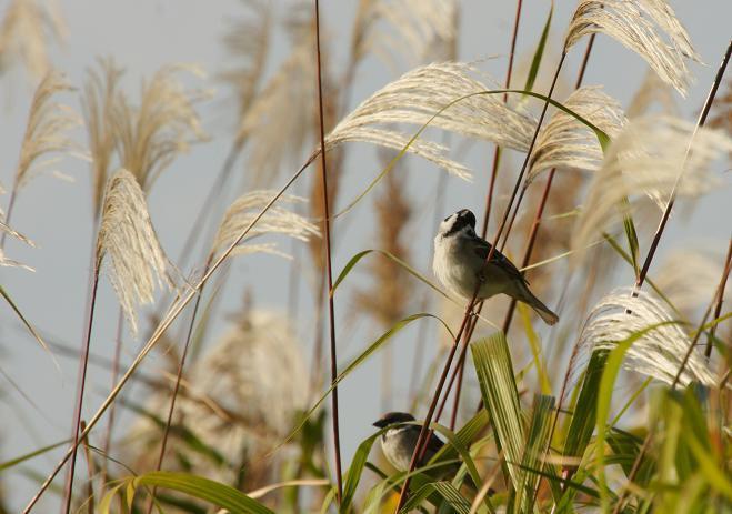 こんな和む瞬間が見れるので野鳥って好きなのです.JPG