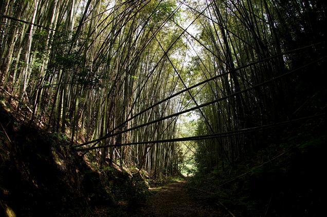 竹薮の中は涼しいです.JPG