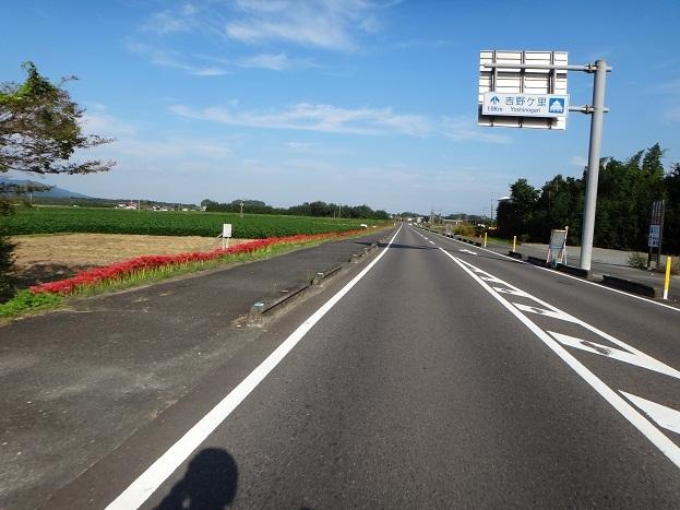 遺跡の道.jpg