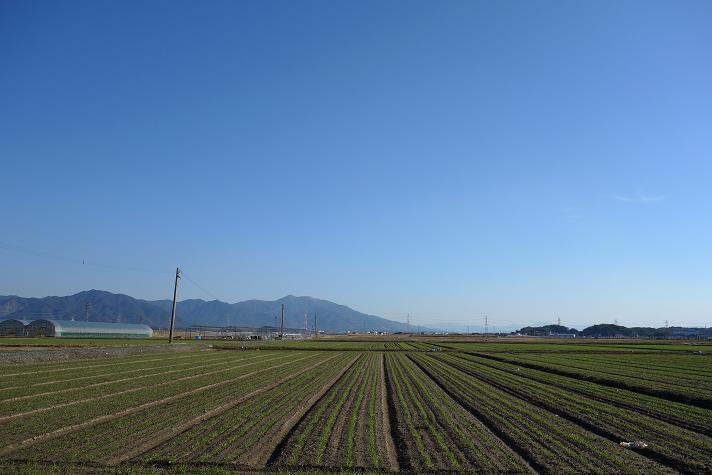 麦の芽.JPG